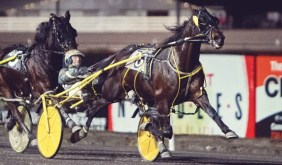Chris Gooden Photos | Foiled Again (Yannick Gingras) in the lead the first time past the grandstand at The Meadows.